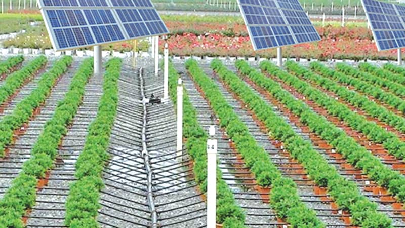 renewable energy and agriculture